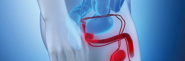 Zaburzenia erekcji – nowe perspektywy leczenia